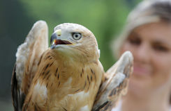 Young Long-legged Buzzard in the hand of an environmentalist Stock Photography
