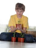 The young lover of plants. Young boy holding sprout in his hands Royalty Free Stock Image