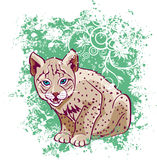 Young lynx on a green background.  Royalty Free Stock Photography