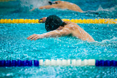 Young male athlete swimmer butterfly. Young male athlete swimmer in pool swimming competition in butterfly Stock Photos