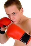 Young male boxer Stock Image
