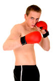 Young male boxer Stock Photography