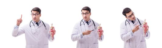 The young male doctor with skeleton isolated on white. Young male doctor with skeleton isolated on white stock photo