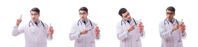 The young male doctor with skeleton isolated on white. Young male doctor with skeleton isolated on white stock photos