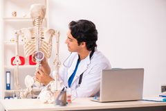 The young male doctor with skeleton royalty free stock photography