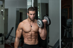 Young Male Doing Biceps Exercises In The Gym Royalty Free Stock Image