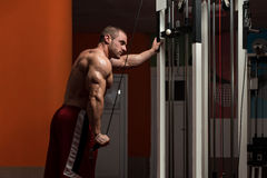 Young Male Doing Triceps Exercises In The Gym Stock Images