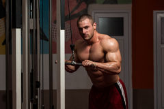 Young Male Doing Triceps Exercises In The Gym Royalty Free Stock Photography