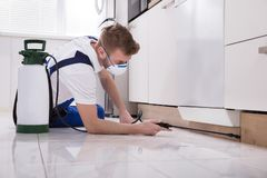 Exterminator Worker Spraying Insecticide Chemical. Young Male Exterminator Worker Spraying Insecticide Chemical In Kitchen Stock Photos