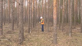 Young caucasian male forester inspects trees in the forest for damage and a bark beetle, sanitary felling of the forest