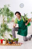 The young male gardener with plants indoors. Young male gardener with plants indoors stock photo