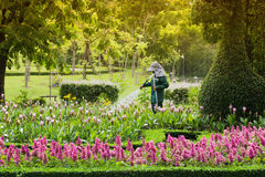 Young male gardener working in greenhouse. Colourful Flowerbeds and Winding Grass Pathway  Formal Garden Stock Photo