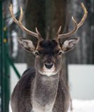 Young male lani at the snow looking at camera portrait Stock Photo