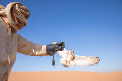 Young male pharaoh eagle owl during a desert falconry show in Dubai, UAE. Stock Photo