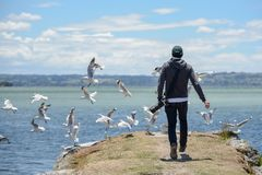 Free Young Male Photographer Chasing Group Of Seagull Birds Near Lake Stock Photo - 109817870