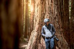 Young male photographer standing in Redwood forest stock images