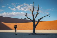 Young male photographer taking photo of dead tree in deadvlei. Young male photographer and traveler taking photo of dead tree in deadvlei Sossusvlei during Royalty Free Stock Photos