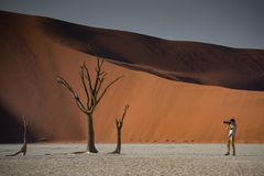 Young male photographer taking photo of dead tree in deadvlei. Young male photographer and traveler taking photo of dead tree in deadvlei Sossusvlei during Stock Photography