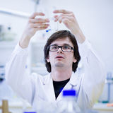 Young male researcher  in a chemistry lab Royalty Free Stock Images