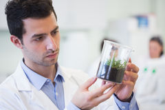 Young male researcher looking at young plant at lab Stock Photo