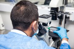 Male scientist looking at cell culture under the microscope Royalty Free Stock Photography