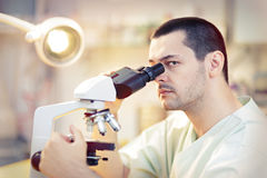 Young Male Scientist with Microscope. Portrait of a male doctor looking through a microscope in a laboratory Royalty Free Stock Photo