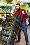 Young male seller moving fresh vegetables royalty free stock photo