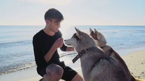 Young male treating two husky dogs on the beach slow motion. Young male treating two husky dogs on the beach stock footage