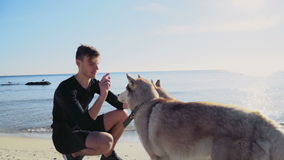 Young male with two husky dogs on the beach slow motion stock video footage
