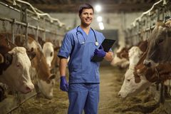 Veterinarian with a clipboard on a cow farm. Young male veterinarian with a clipboard on a cow farm stock image