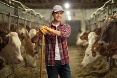 Free Young Male Worker Posing On A Cow Dairy Farm Stock Image - 193121121