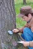 Young man attentively studies a tree bark Stock Photography
