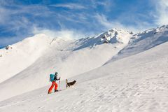 Young man backcountry skiing, going uphill on the mountain, with. Man backcountry skiing, going uphill on the mountain, with happy snow loving dog leading the Stock Photo