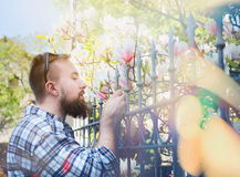 Young man with a beard and sunglasses smelling magnolia flower behind the fence, creating  soft background of the urban landscape Royalty Free Stock Photos