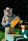 A young man beekeeper works on a beehive near the hives. Natural honey directly from the hive. A young man beekeeper works on a beehive near the hives. Natural royalty free stock photo