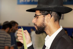 The young man in black hat. BNEY-BRAK, ISRAEL - SEPTEMBER 17, 2013: The young man in black hat with brim and thin glasses carefully considering the branch of Stock Photos