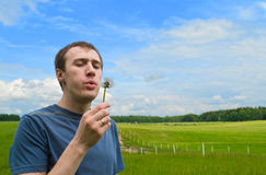 The young man blows on a dandelion. On a green meadow Royalty Free Stock Photos