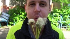 A young man blows dandelion slow motion.  stock video footage