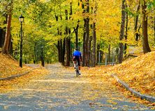 Young man in blue t-shirt on sports bike against the background of the autumn city park, concept of healthy lifestyle, copy space royalty free stock photos