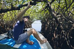 Boat trip through mangrove forest stock images