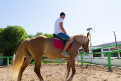Young man on a brown-blond horse in the riding Royalty Free Stock Image
