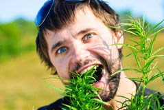 Young man in the bush of cannabis Stock Image