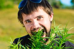 Young man in the bush of cannabis Royalty Free Stock Photography