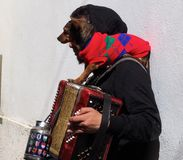 Busker With Small Dog And Accordion. Young man busking in Lisbon Portugal with his small dog and accordion Royalty Free Stock Photo