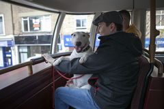 Young man in a cap with a bull terrier in his arms sitting on the front seat of the second floor of the bus. Royalty Free Stock Images