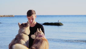 Young man caressing two husky dogs on the beach slow motion. Young man caressing two husky dogs on the beach stock footage