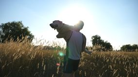Young man carrying on hands his dog by field. Playing with labrador or golden retriever at nature. Love and friendship stock footage