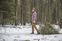 Young man is caryying christmas tree in the wood Royalty Free Stock Photography