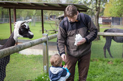 Young man and child feeding lama in zoo Royalty Free Stock Photography