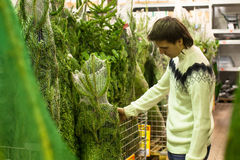 Young man choose christmas tree in the market Royalty Free Stock Photos
